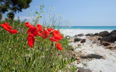 Ferienwohnungen Sardinien am Meer | Sardinien Sardinia